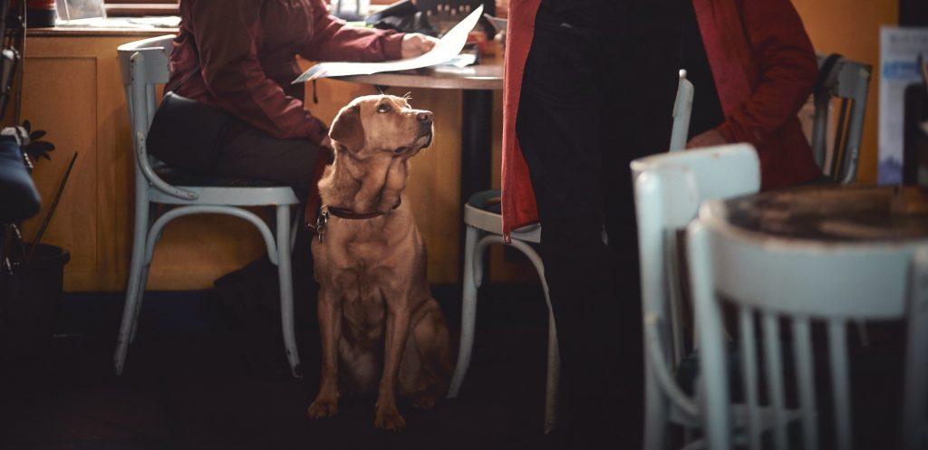 hund på restaurang stockholm